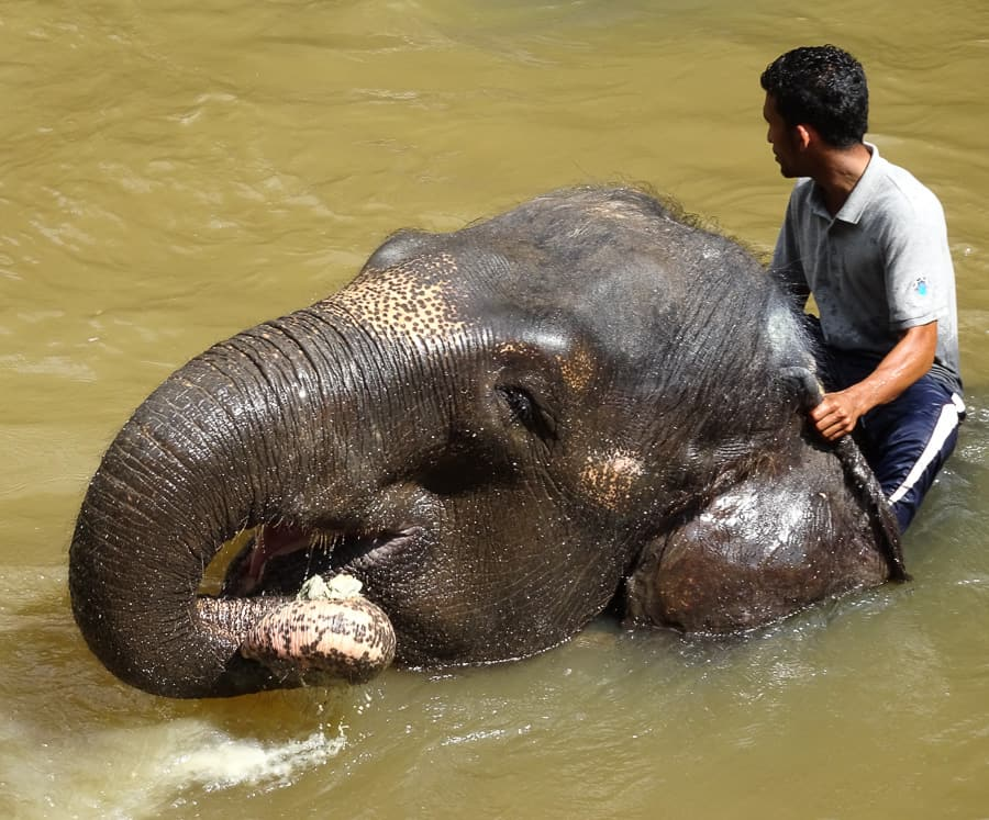 Theres a whole lot of love between the elephants and the workers