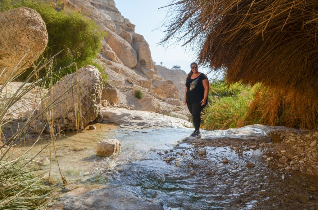 Ein Standing in a stream in Gedi National Park in Israel